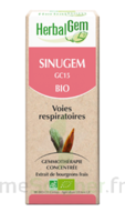 Herbalgem Sinugem Solution buvable bio Fl cpte-gttes/30ml à Bassens