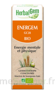 Herbalgem Energem Solution buvable bio Fl cpte-gttes/30ml à Bassens
